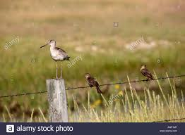 three different types of birds on barbed wire fence at chaplin