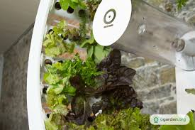 rotating indoor garden grows up to 100 herbs and vegetables every