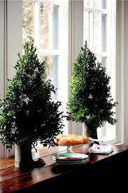 Hiving Out Miniature Boxwood Tree