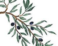 olive branch wall stencil border