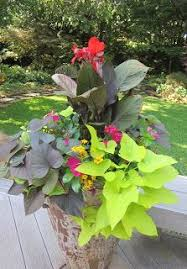 Plant Combination Ideas For Container Gardens Best Site For Container Plant Combo Suggestions Pics For