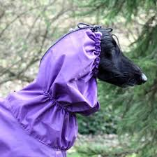 afghan hound in clothes rain wear for afghan hounds saluki u0027s and similar sized dogs