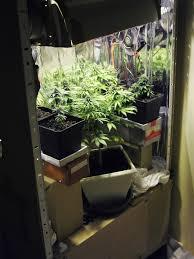 chambre culture complete chambre culture cannabis de complete 28 newsindo co