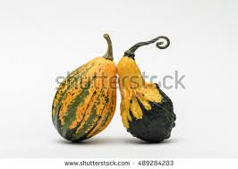 gourds stock images royalty free images vectors