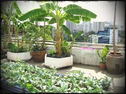 terrace gardening home garden ideas india elegant roof terrace gardening jsgtlr with