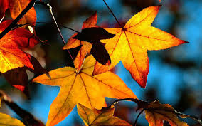 Why Fall Is The Best Season by Top 10 Reasons Why Autumn Is The Best Season Listcrux