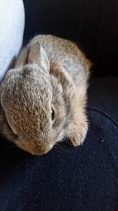 snuggly baby bunny is snuggly album on imgur
