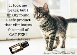 how to eliminate the smell of cat doterra purify oil where