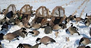 Layout Blinds Reviews Goose Hunting Tips For A Better Hunt Military Hunting And Fishing