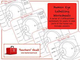 human eye labelling worksheets by helenrachelcrossley teaching