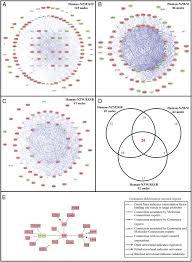 cross species transcriptional network analysis defines shared