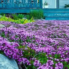 alternatives to grass in backyard low maintenance lawn alternatives planet natural