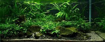 vladimir fitz and aquascaping aqua rebell