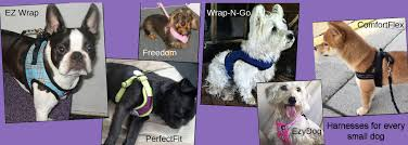 Comfort Flex Dog Harness Golly Gear Especially For Small Dogs Golly Gear