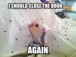 Guinea Pig Meme - livememe com ocd guinea pig