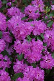 Flowering Shrubs New England - 307 best new england four season landscaping images on pinterest