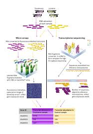 beyond the gene list exploring transcriptomics data in search for