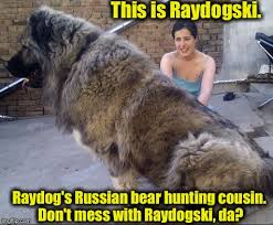 This Is Dog Meme - i ran into raydog s extended family the other day imgflip