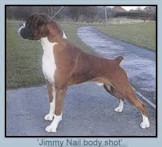 boxer dog crufts 2015 boxer stud dogs boxer puppies crufts boxer winners boxer rescue