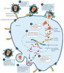 animal u0026 human viruses article viruses khan academy
