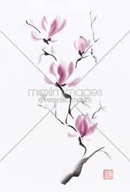 magnolia flowers stock illustration branch of blooming purple magnolia flowers