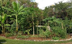 Fall Vegetables Garden by Fall Vegetable Garden Plants For Sale New Ready To Grow Gardens