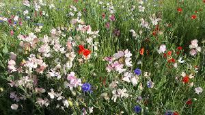 native plants for butterfly gardening benton soil u0026 water news