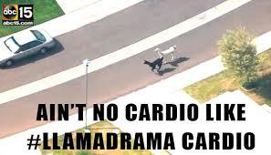 Arizona Memes - llama memes pics hollywood life