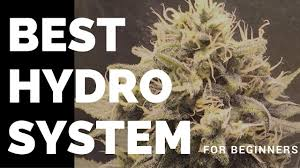 best cannabis hydro system for beginners youtube