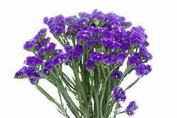 statice flowers statice patti s happy flowers