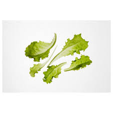 växer seeds crispy lettuce red romaine lettuce green romaine