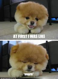 Cute Puppy Meme - at first i was like snore i has a hotdog dog pictures funny