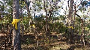 native plants adelaide how you can get a good deal on native plants good living
