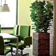indoor plants u2013 important part of interior design www tidyhouse info