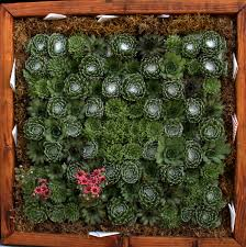 excellent ideas living plant wall homey inspiration eco brooklyn