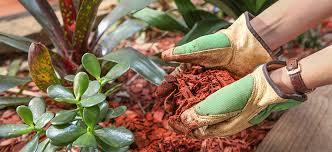 garden care flower power