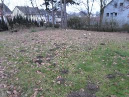 Ich Suche Haus Zu Kaufen Ca 700m Großes Baugrundstück Für 149 000 U20ac Zu Verkaufen