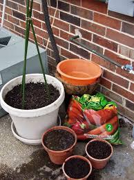 container vegetable gardening in 10 steps indoor plants expert