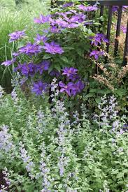 Cottage Gardening Ideas Cottage Garden Design Ideas Garden Design