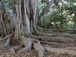 Adaptations Of Tropical Rainforest Plants - plants of the caribbean tropical rainforest u2013 megan u0027s blog