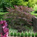 fleming s top ten trees for small yards g a r d e n i n g