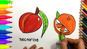 how to draw and color nectarine orange coloring pages for kids