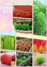 get cheap garden ornamental grass aliexpress alibaba