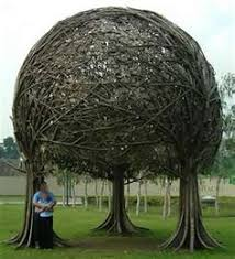 tree images pictures interesting facts