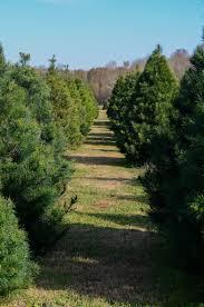 iron u0026 twine have babies will travel bottoms tree farm