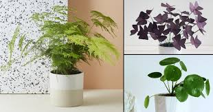 small potted plants 10 cute small indoor plants small houseplants balcony garden web