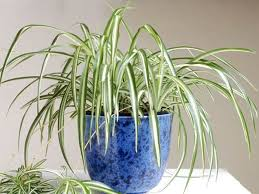 low light plants for bedroom the easiest indoor house plants that won u0027t die on you today com