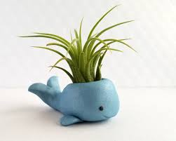 Small Desk Plants Air Plant Whale Airplant Holder Small By Funusualsuspects