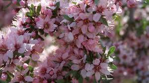 beautiful nature spring green cute flower