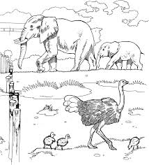 39 african animal coloring pages animals printable coloring pages